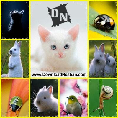 مجموعه والپیپر زیبا از حیوانات برای موبایل - دانلودنشان دات کام